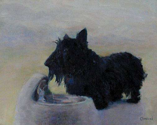 Christy - my brother's Scottish Terrier